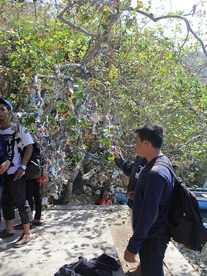 pohon satonda